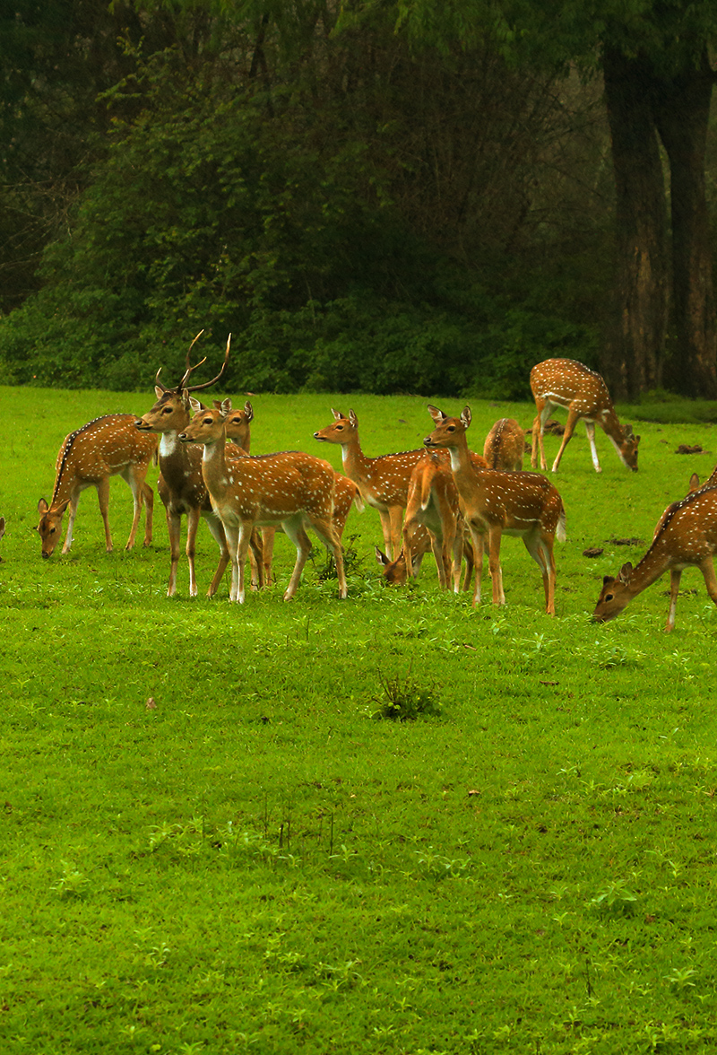 Sharavathi Valley Wildlife Sanctuary