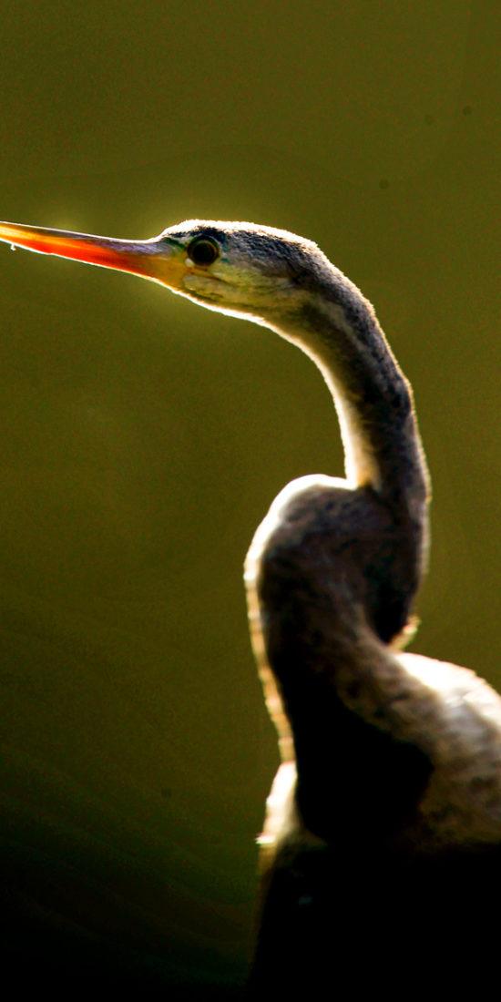 Bonal Bird Sanctuary
