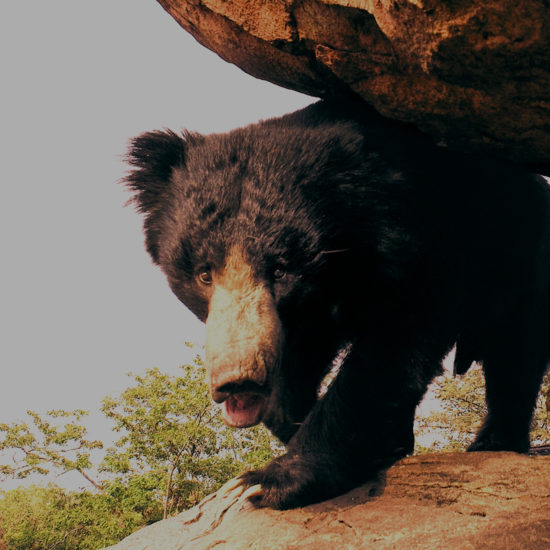 Daroji Sloth Bear Sanctuary