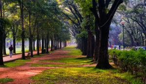 Cubbon _Park
