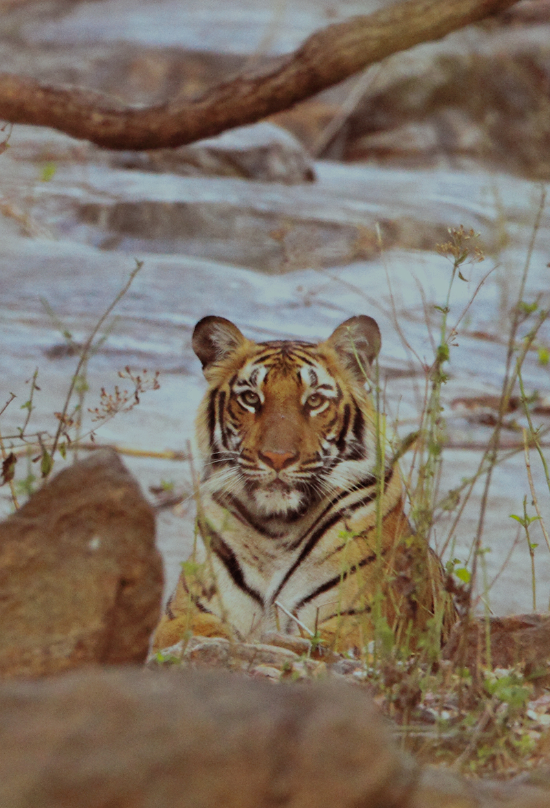 Kali Tiger Reserve