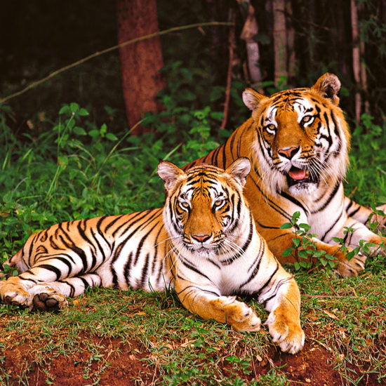 Nagarahole Willife safari