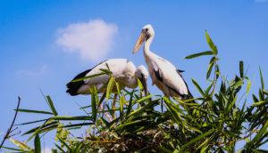 Ranganatittu-bird-sanctuary