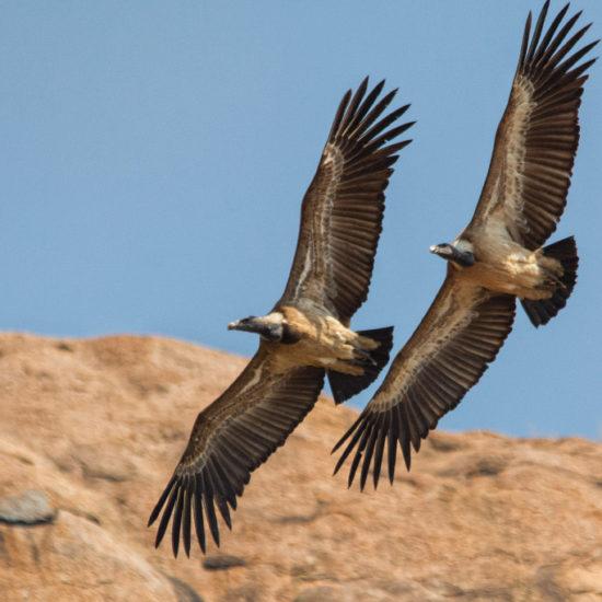 Ramadevarabetta Vulture Sanctuary