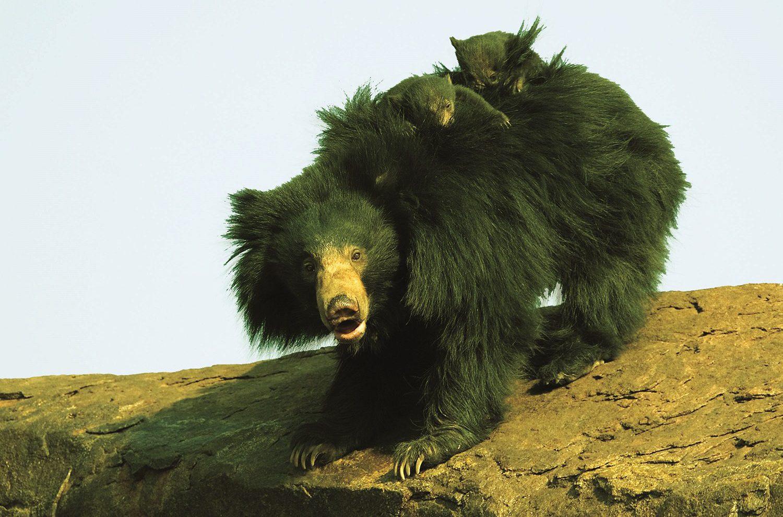 Daroji-Sloth-Bear-Sanctuary-Hampi