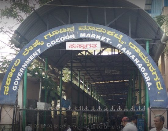 Cocoon Market