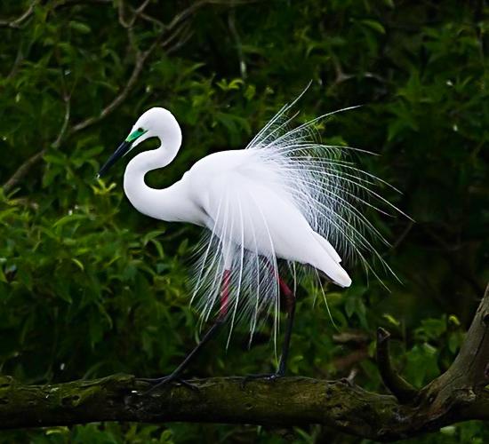 Gudavi Bird Sanctuary