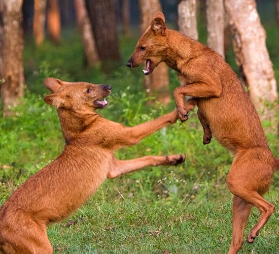 Mookambika Wildlife Sanctuary