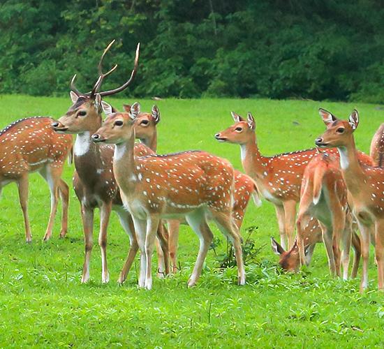 Someshwara Wildlife Sanctuary