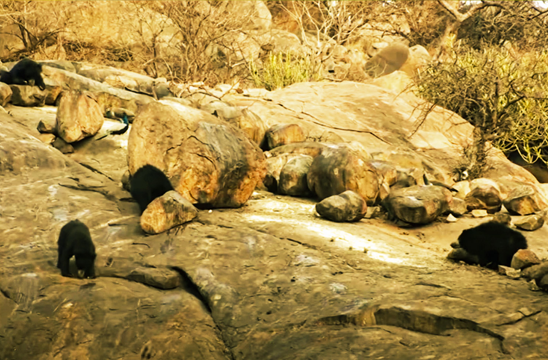 Daroji Bear Wildlife Sanctuary