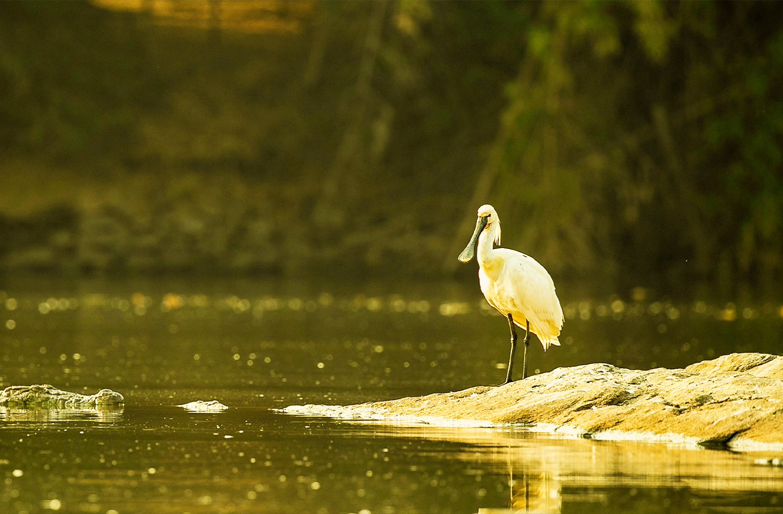 Biking in Karnataka ranganathittu-bird-sanctuary